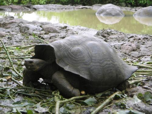 Amazon and Galapagos 2004